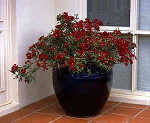 The Patio Versatile container gardening ideas